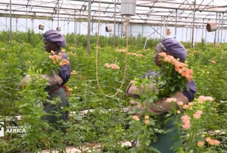 Kenya's $800 million flower market is seeing a boost, thanks to China